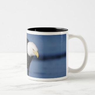 Bald Eagle, Haliaeetus leucocephalus,adult Two-Tone Coffee Mug