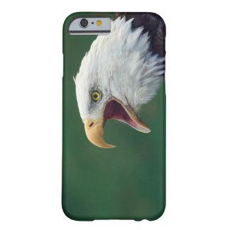 Bald Eagle (Haliaeetus leucocephalus) Barely There iPhone 6 Case
