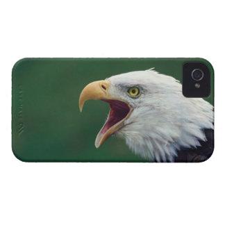 Bald Eagle (Haliaeetus leucocephalus) iPhone 4 Cover