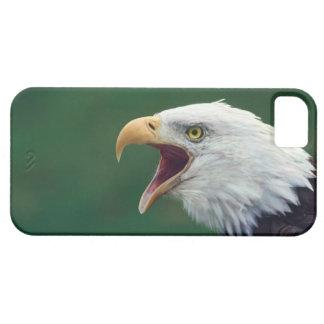 Bald Eagle (Haliaeetus leucocephalus) iPhone 5 Covers