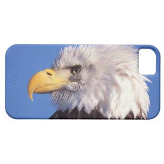 bald eagle, Haliaeetus leucocephalus, close up, 2 iPhone SE/5/5s Case