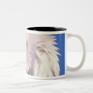 bald eagle, Haliaeetus leucocephalus, close up, 2 Two-Tone Coffee Mug