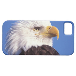 bald eagle, Haliaeetus leucocephalus, close up, 3 iPhone SE/5/5s Case
