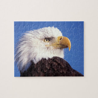 bald eagle, Haliaeetus leucocephalus, close up, 3 Jigsaw Puzzles