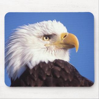 bald eagle, Haliaeetus leucocephalus, close up, 3 Mouse Pad