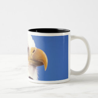 bald eagle, Haliaeetus leucocephalus, close up, 3 Two-Tone Coffee Mug