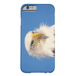 bald eagle, Haliaeetus leucocephalus, close up, Barely There iPhone 6 Case