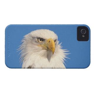bald eagle, Haliaeetus leucocephalus, close up, iPhone 4 Cover