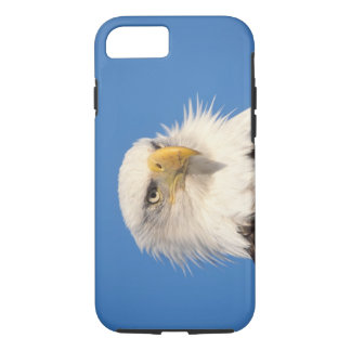 bald eagle, Haliaeetus leucocephalus, close up, iPhone 7 Case