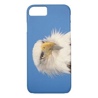 bald eagle, Haliaeetus leucocephalus, close up, iPhone 8/7 Case