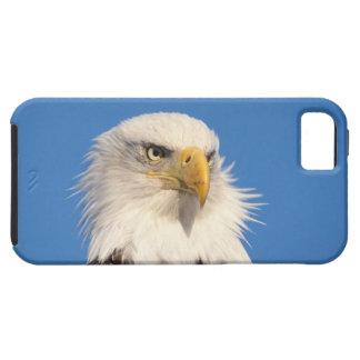 bald eagle, Haliaeetus leucocephalus, close up, iPhone SE/5/5s Case