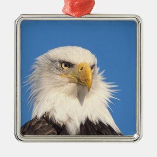 bald eagle, Haliaeetus leucocephalus, close up, Metal Ornament
