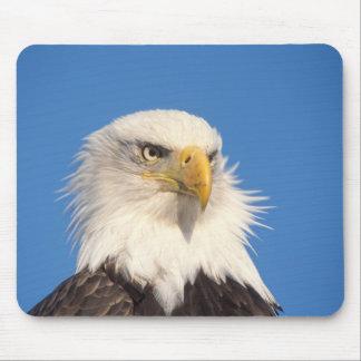 bald eagle, Haliaeetus leucocephalus, close up, Mouse Pad
