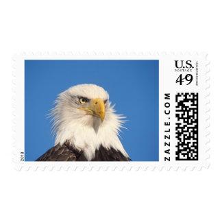 bald eagle Haliaeetus leucocephalus close up Stamps