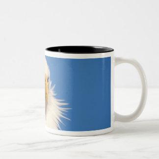 bald eagle, Haliaeetus leucocephalus, close up, Two-Tone Coffee Mug