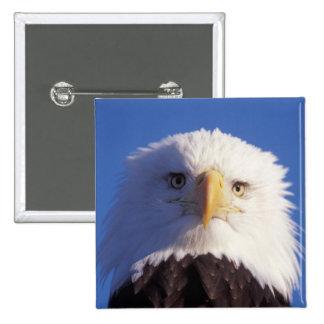 bald eagle, Haliaeetus leucocephalus, head shot, Button