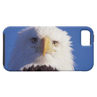 bald eagle, Haliaeetus leucocephalus, head shot, iPhone SE/5/5s Case