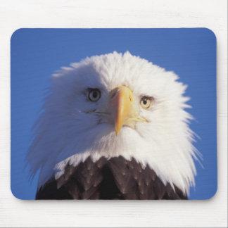 bald eagle, Haliaeetus leucocephalus, head shot, Mouse Pad