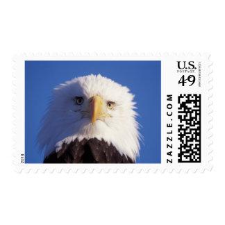 bald eagle, Haliaeetus leucocephalus, head shot, Postage