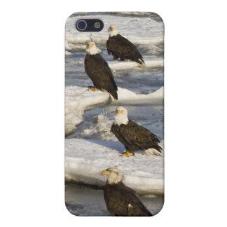 Bald Eagle, Haliaeetus leucocephalus, Homer, 2 Cover For iPhone SE/5/5s