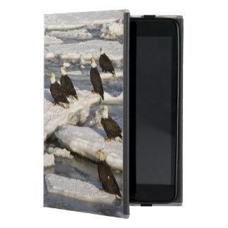 Bald Eagle, Haliaeetus leucocephalus, Homer, 2 Covers For iPad Mini
