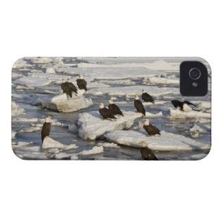 Bald Eagle, Haliaeetus leucocephalus, Homer, 2 iPhone 4 Cover