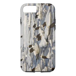 Bald Eagle, Haliaeetus leucocephalus, Homer, 2 iPhone 7 Case