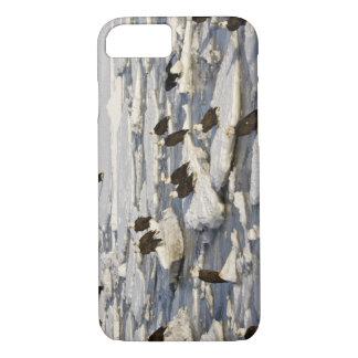 Bald Eagle, Haliaeetus leucocephalus, Homer, 2 iPhone 8/7 Case