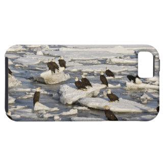 Bald Eagle, Haliaeetus leucocephalus, Homer, 2 iPhone SE/5/5s Case