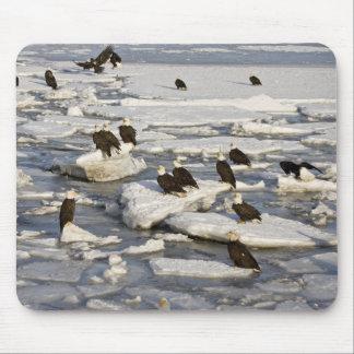 Bald Eagle, Haliaeetus leucocephalus, Homer, 2 Mouse Pad