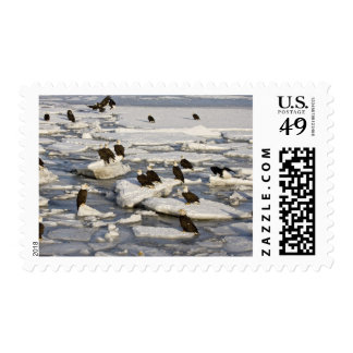 Bald Eagle Haliaeetus leucocephalus Homer 2 Postage Stamp