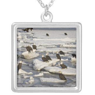 Bald Eagle, Haliaeetus leucocephalus, Homer, 2 Silver Plated Necklace