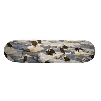 Bald Eagle, Haliaeetus leucocephalus, Homer, 2 Skateboard Deck