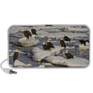 Bald Eagle, Haliaeetus leucocephalus, Homer, 2 iPod Speaker
