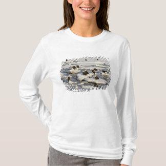 Bald Eagle, Haliaeetus leucocephalus, Homer, 2 T-Shirt