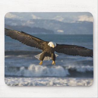 Bald Eagle, Haliaeetus leucocephalus, Homer, 3 Mouse Pad
