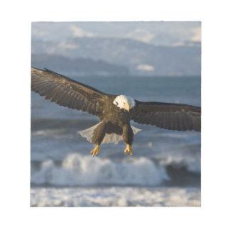 Bald Eagle, Haliaeetus leucocephalus, Homer, 3 Notepads
