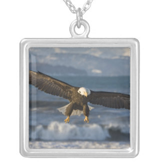 Bald Eagle, Haliaeetus leucocephalus, Homer, 3 Silver Plated Necklace
