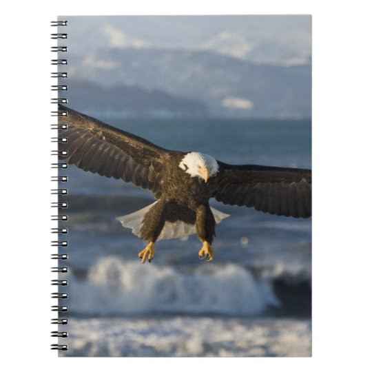 Bald Eagle, Haliaeetus leucocephalus, Homer, 3 Spiral Notebook