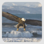 Bald Eagle, Haliaeetus leucocephalus, Homer, 3 Square Sticker