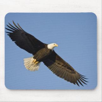 Bald Eagle, Haliaeetus leucocephalus, Homer, 4 Mouse Pad