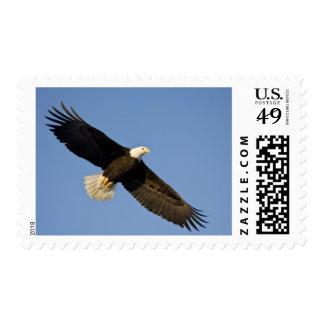 Bald Eagle Haliaeetus leucocephalus Homer 4 Postage Stamp