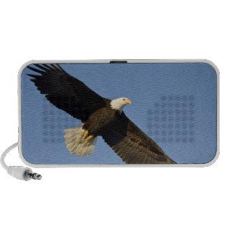 Bald Eagle, Haliaeetus leucocephalus, Homer, 4 PC Speakers