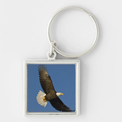 Bald Eagle, Haliaeetus leucocephalus, Homer, Keychain