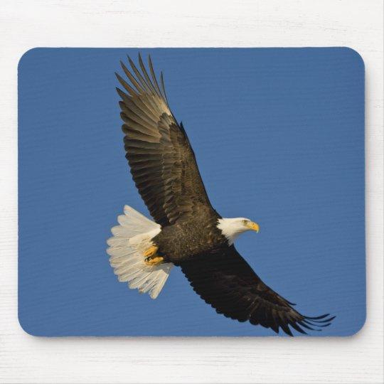 Bald Eagle, Haliaeetus leucocephalus, Homer, Mouse Pad
