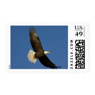 Bald Eagle Haliaeetus leucocephalus Homer Postage Stamps