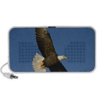 Bald Eagle, Haliaeetus leucocephalus, Homer, Travelling Speaker