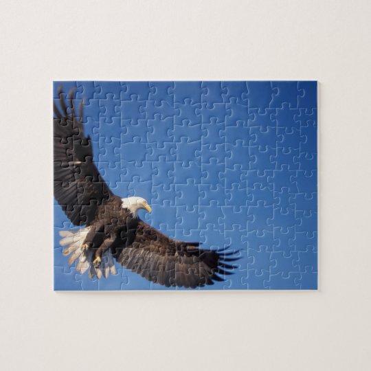 bald eagle, Haliaeetus leucocephalus, in flight 2 Jigsaw Puzzle