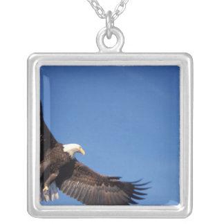 bald eagle, Haliaeetus leucocephalus, in flight 2 Silver Plated Necklace