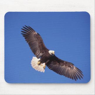 bald eagle, Haliaeetus leucocephalus, in flight 3 Mouse Pad